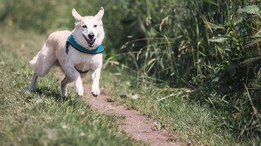 Quelques astuces de base pour enseigner le rappel à votre chien