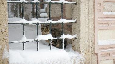 Chats errants en hiver, comment les aider ?