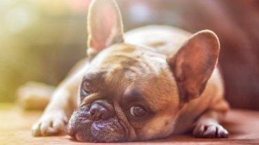 Comment savoir si votre chien est malade ?